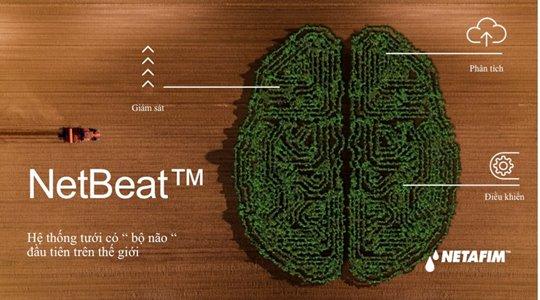 net beat