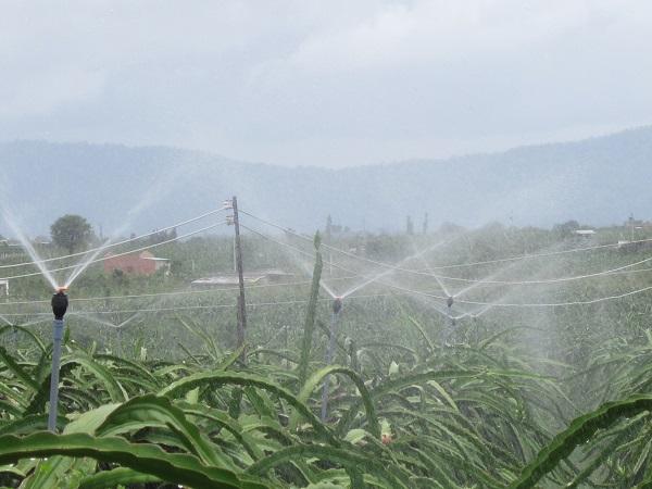 Nhu cầu nước tưới cho cây thanh long