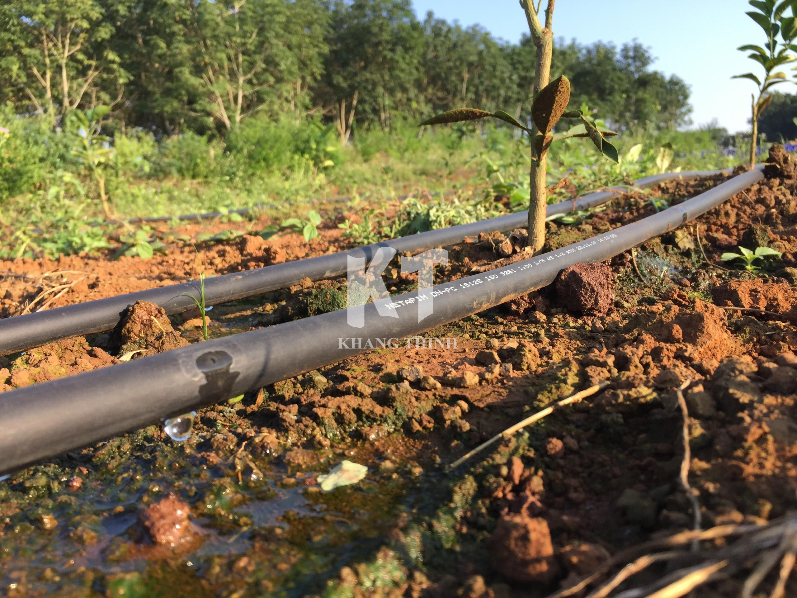 Hệ thống tưới nhỏ giọt cho cây Cam trồng mới - Nghệ An